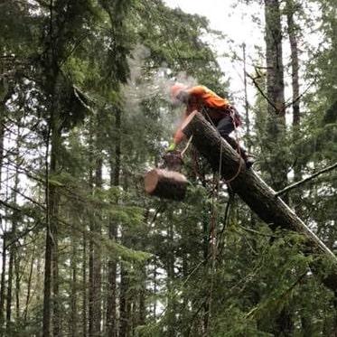 Tree Removal Permit Bellingham WA, Whatcom County Tree Ordinance