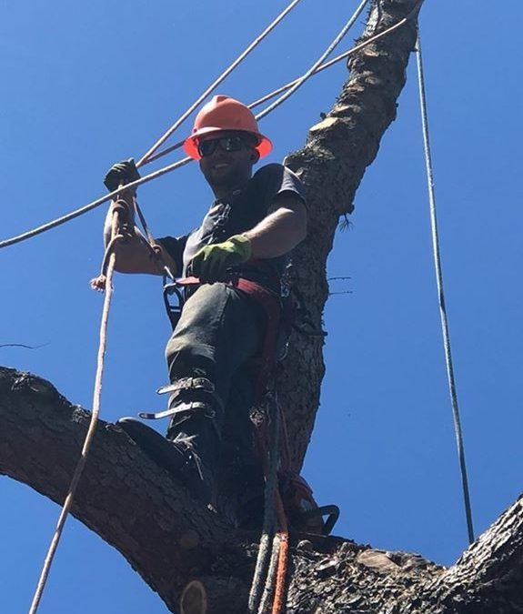Timber Tree Service Offers Professional Trimming and Pruning