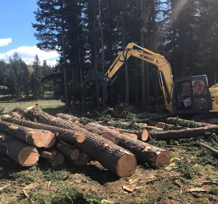 Timber Tree Service Offers Removal Tips to Bellingham Residents