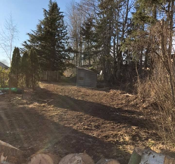 Timber Tree Services Offers Professional Land Clearing Services To Residents
