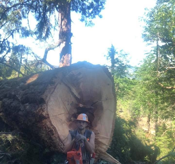 Bellingham Tree Company Offers Excellent Tree Care Services